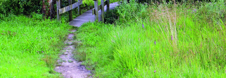 Brücke mit Naturpfad