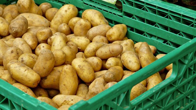 Bio Kartoffeln Emmental