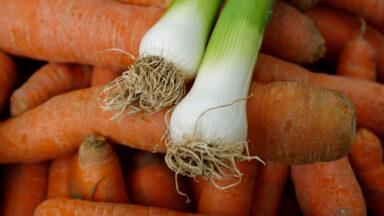 Karotten und Lauch