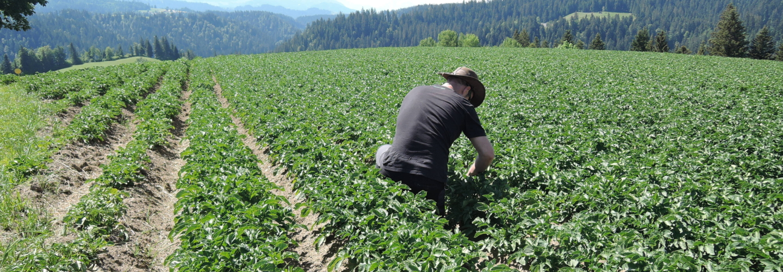 4 Landwirt Kartoffelfeld Handarbeit GAES 2020