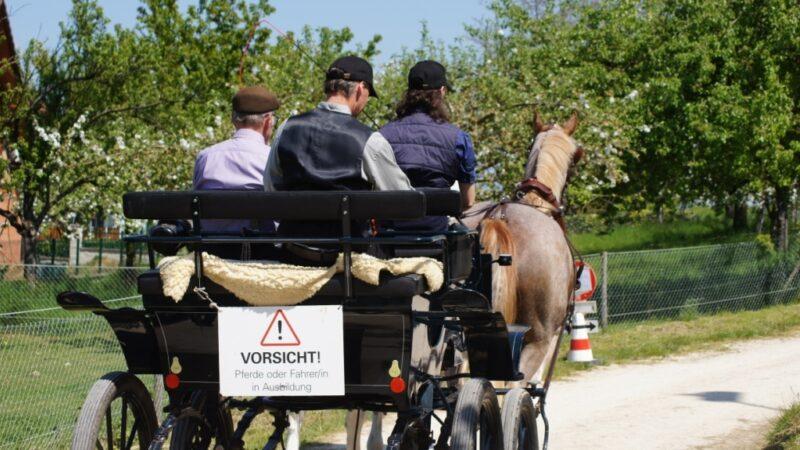 Pferdeberufe Berufsprüfung Kutsche