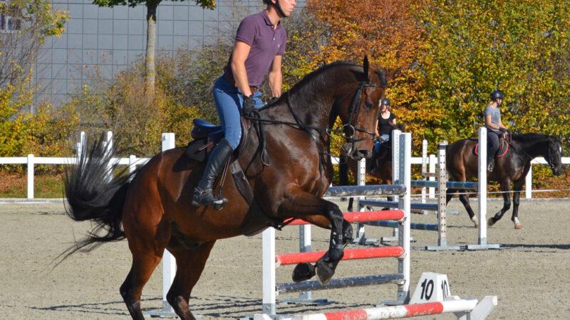 Pferdeberufe Berufsprüfung Reiter über Hürde