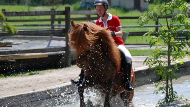 Pferdeberufe Berufsprüfung Reiterin mit Pferd im Wasser