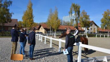 Pferdeberufe Berufsprüfung Experten