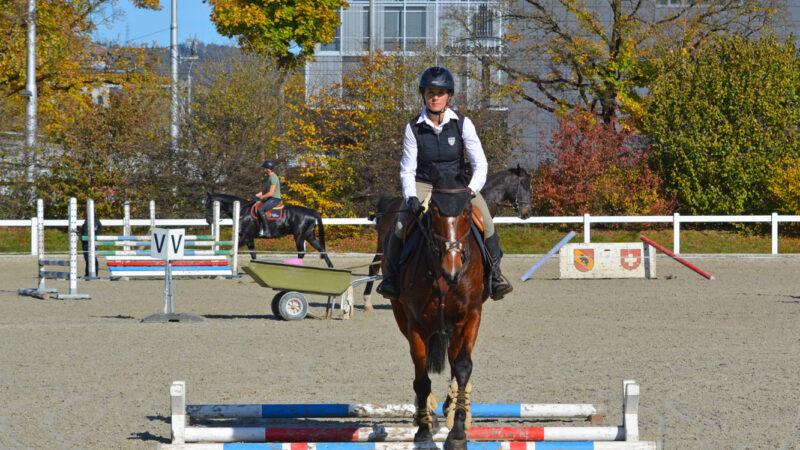 Pferdeberufe Grundbildung