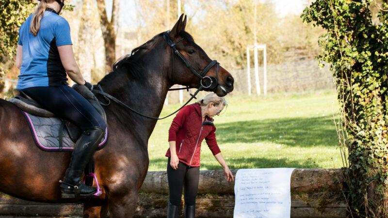 Fachprüfung Pferde